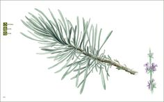 Ebook Tratado Plantas Medicinais de Plantas Medicinais Mineiras via Matricaria