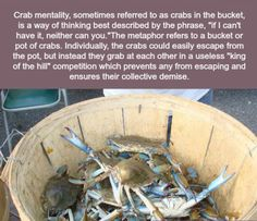 Crab mentality=collective demise.... - Imgur