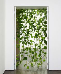Simple vines would be nice - there will already be white tulle to disguise the door frame... and this is just a picture of vines in a door :/ I'm looking for something green that would Frame the door...