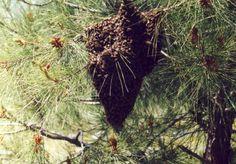 Bienen bei Adrasan, Foto: S. Hopp