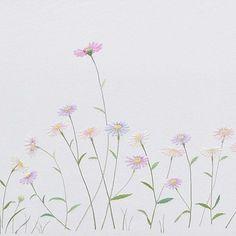 #aster #chrysanthemum
