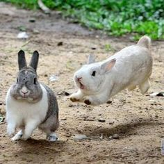White bunny must have a complaint ...or they have both been scared by something...