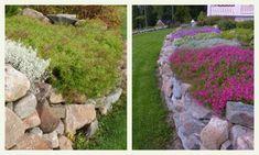 Kasveja kivimuurin reunalle - Salainen puutarha - Vuodatus.net
