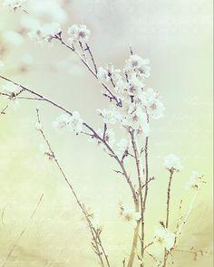 """""""Vintage Blossom"""" by Jennifer Manges"""