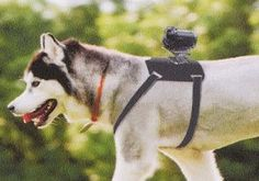 dogcam: Sony announced a camera harness for dogs. Alas, it's only available at their Japanese store for now.