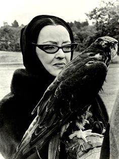 Bette Davis. Love, love those cats! But I love the raptor more! Looks like a hawk more than a falcon. Harris?