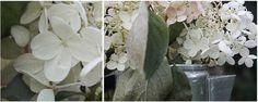 des fleurs en septembre