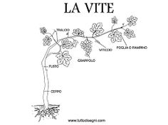 from grapes to wine didactic cards primary school – Ric … – Educational Toy Ideas School Equipment, Learning Italian, Primary School, Science Experiments, Educational Toys, Pixel Art, Homeschool, Wine, Cards