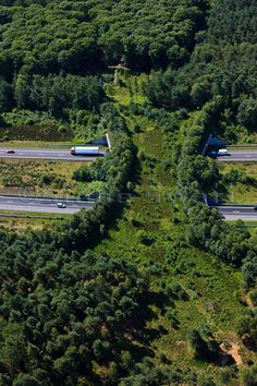 Ecoduct, A1, Kootwijk, Gelderland.