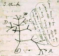 """I think"" soon to be my first tattoo :) Darwin is such an inspiration and even h. ""I think"" soon to be my first tattoo :) Darwin is such an inspiration and even he didn't know it. Charles Darwin, Robert Darwin, Darwin Tree Of Life, Darwin Evolution, Human Evolution, Phylogenetic Tree, Evolution Tattoo, Scientific Writing, Illustrations"