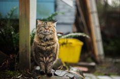 Photo by Cat Mapper (Max Ogden)   Unsplash