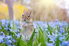 Картинки по запросу весна