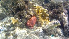 Help een krab tijdens het snorkelen in Curacao Willemstad, Painting, Painting Art, Paintings, Painted Canvas, Drawings