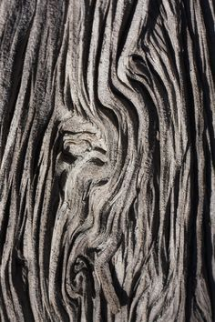 Tree Bark Textures with intricate patterns - organic texture source; nature's artwork
