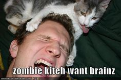 A whole collection of zombie kitties. My dream!