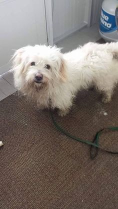 Thomas J. O'Connor Animal Control and Adoption Center Page Liked · 12 hrs · Edited ·    Hi Do you know me? I was found on Roosevelt ave in Springfield. Please help me find my family!