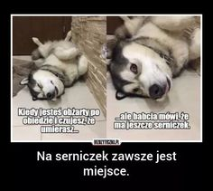 Very Funny Memes, Wtf Funny, All About Animals, Animals And Pets, Creepypasta, Good Mood, Cool, Best Memes, Cute Cats