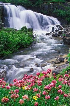 Waterfall and Parry Clover, Trifolium parryi, Yankee Boy Basin, Uncompahgre National Forest, Colorado Beautiful World, Beautiful Places, Beautiful Pictures, Beautiful Gardens, Beautiful Waterfalls, Beautiful Landscapes, Forest Poster, The River, National Forest