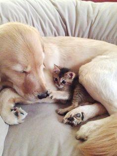 En amitié être pareil à son ami n'est pas nécessaire...seules les valeurs doivent être les mêmes et ça ne trompe pas.