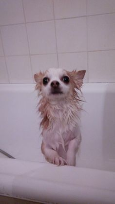 After shower . saveeee me !