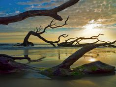 Driftwood Beach, Jekyll Island, GA | One of my absolute favorite beaches