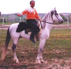 Karacabey horse. Turkish recently extinct horse. They were developed in Karacabey Stud by crossing a Turkish strain of Arabians bred specifically for racing with the native Anadolu and Nonius breeds.