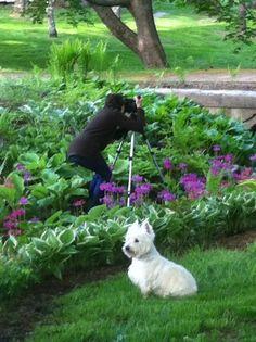 Carolyne Roehm - her Westie in the garden