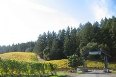 Flora Springs Winery :: Napa Valley