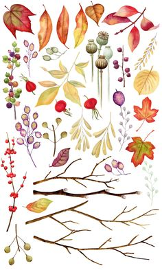 Autumn Herbarium Watercolor Clipart in Design Elements on Yellow Images Creative Store Watercolor Clipart, Watercolor Illustration, Floral Watercolor, Autumn Illustration, Watercolor Artists, Watercolor Painting, Watercolors, Autumn Nature, Autumn Leaves