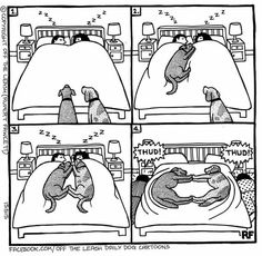 Mesmerizing Training Your Dog Proven, Useful Hints And Tips Ideas. Remarkable Training Your Dog Proven, Useful Hints And Tips Ideas. Funny Dogs, Funny Animals, Cute Animals, I Love Dogs, Cute Dogs, Tierischer Humor, Dog Comics, Dog Jokes, Dog Shaming