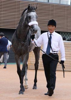 2016-09-11 京成杯AH ダノンプラチナ