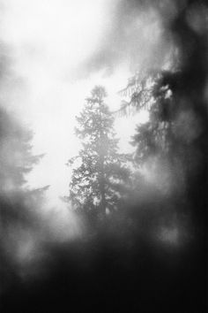 Window in the Forest  {Freed From Rage and Sorrow}  - ATTASALINA