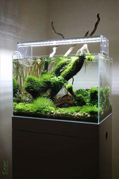 planted aquarium, nano tank, aquascape by Lauris Karpovs