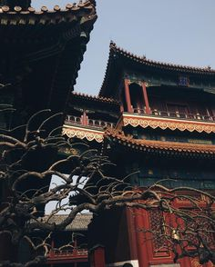 "8 lượt thích, 1 bình luận - Evdokia (@evdokia_no) trên Instagram: ""☄☄☄#chinatown #beijing #vscocam #followme #travel"""
