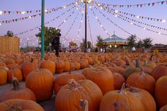 Pumpkin hunting at Fright Fair by Recovering Vagabond on Flickr.
