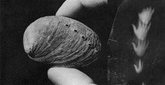 Shell camera, it took six photographs at once, creating ghostly, multi-angle analog images.