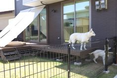 Dog Spaces, Terrace Garden, Hana, Kitchen Design, New Homes, Exterior, Interior Design, Image, Nest Design