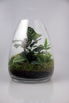 255 Best Terrarium Ideas Images Flowers Gardening Miniature Gardens