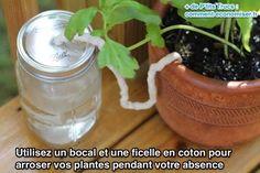 Utilisez un bocal et une ficelle en coton pour  arroser vos plantes pendant votre absence