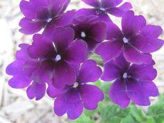 purple by Susan Smith, via 500px