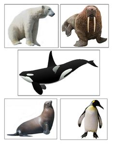 Arctic Animal cards can be used for matching and memory games to teach preschoolers about arctic animals through language development
