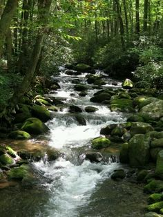 Smokey Mtn stream, TN, by Lara McCaulley
