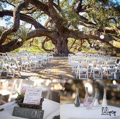 Tree ceremony   treaty oak Jacksonville, Florida  lilipopphotography.com » blog