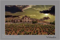 Viñedos by yojayto