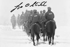 """""""Keep off the Grass"""" - atmospheric snowy wintry scene of race horses on the gallops signed by former National Hunt champion jockey and champion trainer Jonjo O'Neill."""