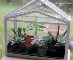 I've been wanting a glass terrarium for succulents in my home for quite some time now -- I know, I'm way behind on the trend! I purchased . Terrarium Diy, Glass Terrarium, Air Plants, Indoor Plants, Indoor Gardening, Hanging Plants, Mini Greenhouse, Miniature Greenhouse, Greenhouse Ideas