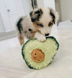 Super Cute Puppies, Cute Baby Dogs, Cute Little Puppies, Super Cute Animals, Cute Dogs And Puppies, Cute Little Animals, Cute Funny Animals, Doggies, Funniest Animals