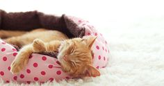 Show your pet all of your love with quality pet beds, pet toys, and pet collars; from Kong toys to elevated pet beds and custom embroidered collars, we have a large variety waiting. Good Morning Roses, Good Morning Good Night, Day For Night, Kong Toys, Online Pet Supplies, Pet Collars, Pet Beds, Sweet Dreams, Cute Cats