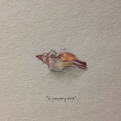 Day 13 : They hide the ocean in a shell. 27 x 15 mm. #365paintingsforants #miniature #watercolour #shell