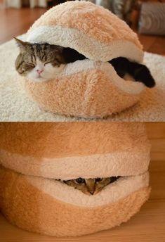 hauskatze verwöhnen katzen möbel bett flauschig
